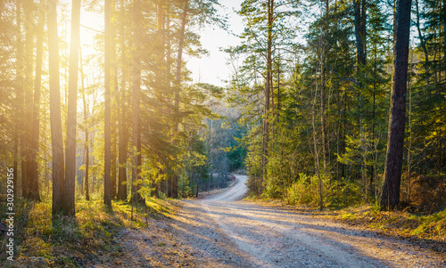 Obraz road in forest - fototapety do salonu