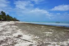 Paje, Zanzibar Island, Tanzani...