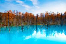 冬待ちの青池