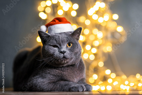 cat in a santa hat on a background of glare regland