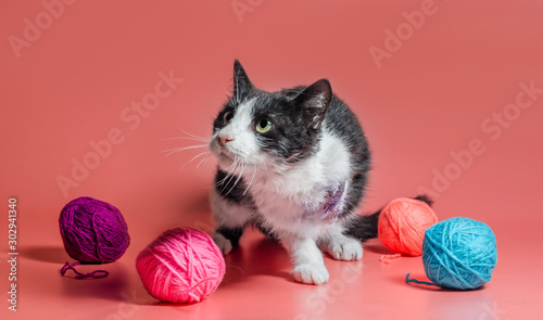 veterinarydisabled cat with amputated forepaw among balls of woolen thread on a Wallpaper Mural