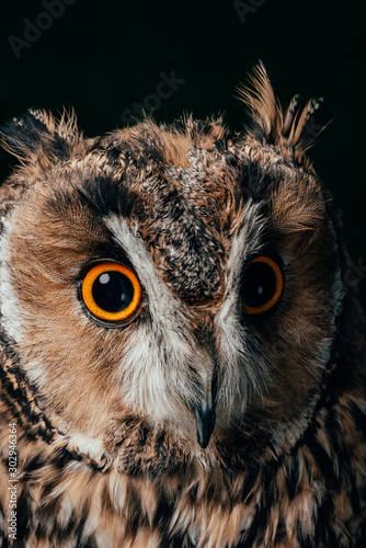 Canvas Prints Hand drawn Sketch of animals close up view of wild owl muzzle isolated on black