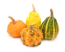 Group Of Warted Ornamental Gourds In Different Colours
