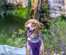 Cutie Dog Modeling And Smile T...