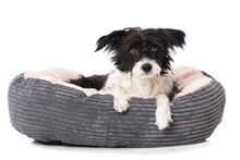 Tired Dog Lying In A Dog Bed I...