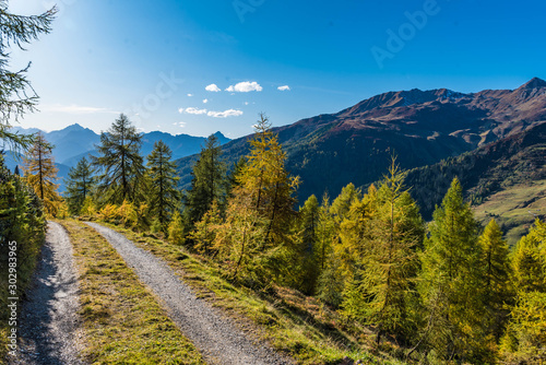 road in the alpine forest Wallpaper Mural