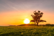 Abandoned Tree When Sun Rays Pass Through The Center Of The Trunk And Orange Clouds Staying At Sunset Overlooking The Countryside And Hay On The Edge Of Captured In Beskids Nature