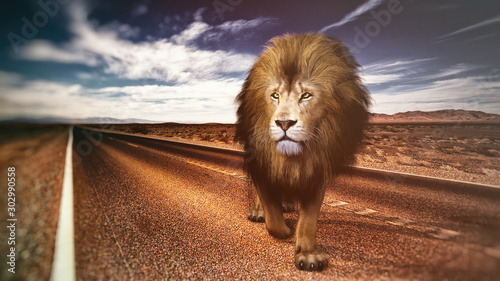 lion on road