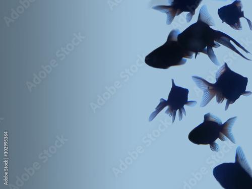 goleden fish on blue gradient background  - 302995364