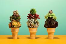3 Succulents In Ice Cream Cone On Pastel Colors Conceptual Art