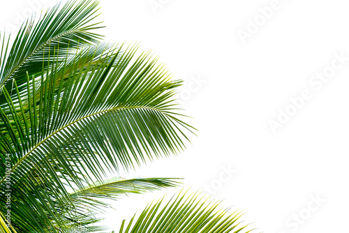 Εκτύπωση καμβά  Green Leaves of palm ,coconut tree bending isolated on white background