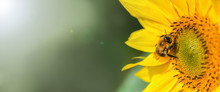 Banner. Bumblebee. One Large B...