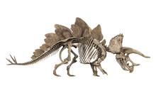 Fossil Skeleton Of Dinosaur Stegoceratops Isolated