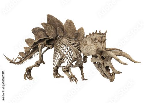 Fotografie, Obraz Fossil Skeleton of Dinosaur Stegoceratops Isolated