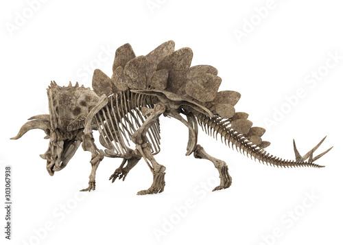 Obraz na plátně  Fossil Skeleton of Dinosaur Stegoceratops Isolated