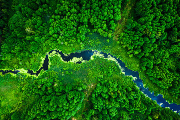 Amazing blooming algae on green river, aerial view