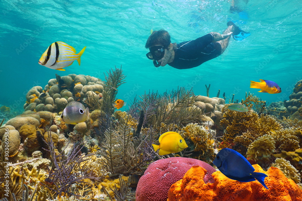 Fototapeta Caribbean sea colorful coral reef with tropical fish and a man snorkeling underwater