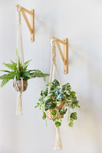 Indoor Flowers In Flower Pots Hanging On A White Wall On Brackets