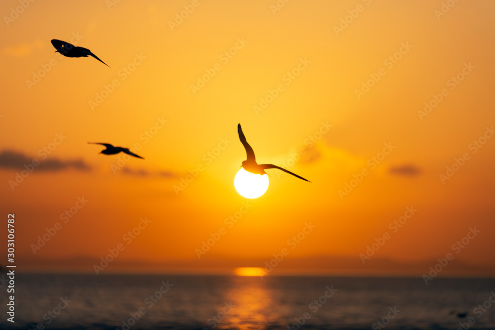 Fototapety, obrazy: Sunset view with seagulls and sea.