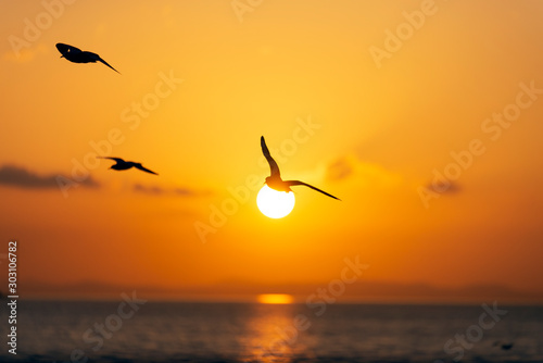 Fototapeten See sonnenuntergang Sunset view with seagulls and sea.