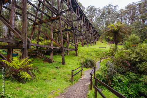 Fotografie, Obraz Noojee Trestle Rail Bridge in Victoria Australia