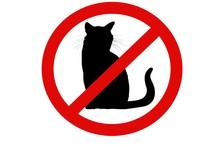 No Cats Allowed Sign On White
