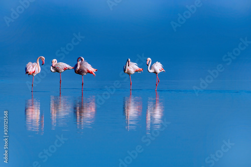 Canvas Prints Flamingo Wild african birds. Group birds of pink african flamingos walking around the blue lagoon on a sunny day