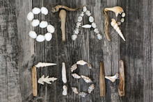 Abstract Of Driftwood, Seashel...