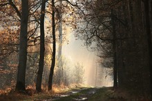 Country Road Through The Autum...