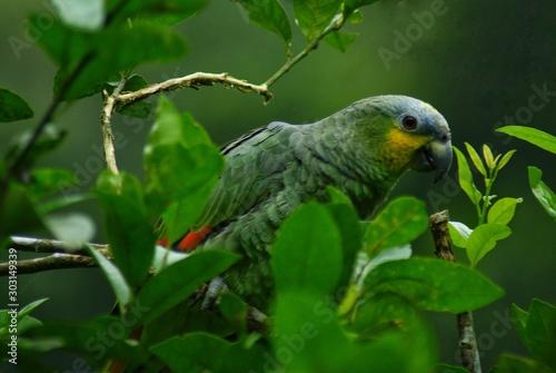Fotobehang Papegaai parrot on a branch