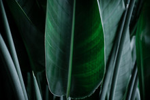 Dark Green Palm Leaves Against Gray Wall. Minimalism Interior Concept, Copyspace