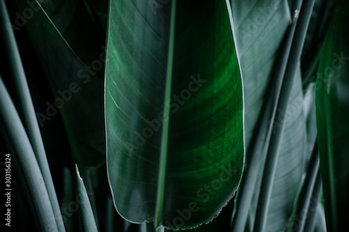Foto  Dark green palm leaves against gray wall