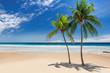 Tropical paradise beach. Palm trees on tropical white sand sunny beach