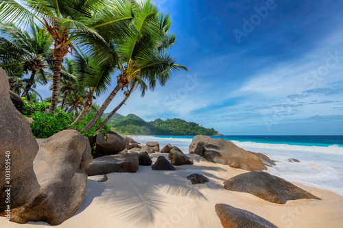 Fototapeta Tropical exotic beach and coconut palms  obraz