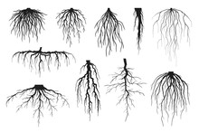 Tree Roots Silhouettes Isolate...