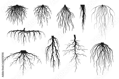 Fotografie, Tablou Tree roots silhouettes isolated on white, vector set of taproot and fibrous root