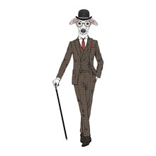 Humanized Italian Greyhound Breed Dog Dressed Up In Vintage Outfits. Design For Dogs Lovers. Fashion Anthropomorphic Doggy Illustration. Animal Wear Suit, Tie, Glasses, Walking Stick. Hand Drawn