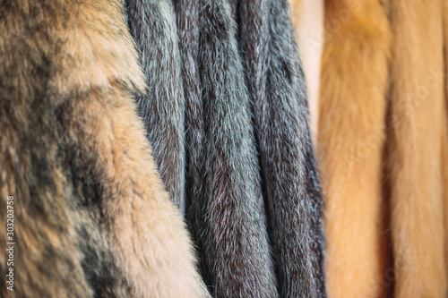 Obraz Animal fur.  foxes, raccoon, wolf, beaver, mink, nutria hanging after processing. - fototapety do salonu