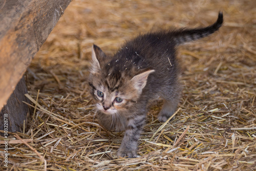 one small cat in barn
