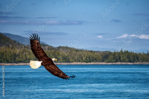 Photographie Bald eagle is flying over the blue sea water