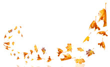 Leaves Wind Autumn Weather Background Isolated