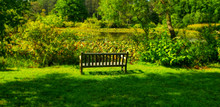 Park Bench By A Pond At The Ho...