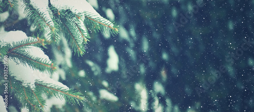 Fotobehang Bomen Winter Season Evergreen Christmas Tree Pine Branches With Snow and Falling Snowflakes, Horizontal