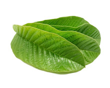 Isolated Fresh Green Guava Leaves With A White Background