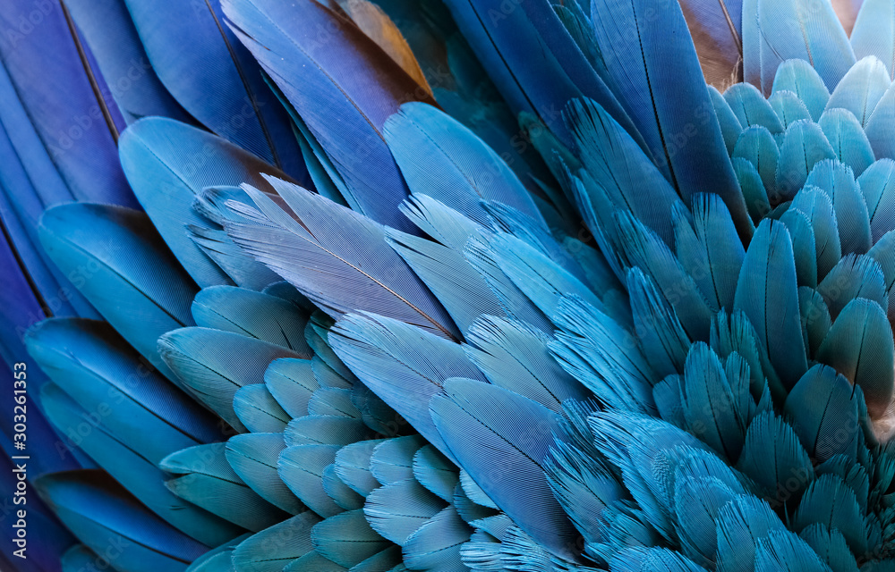 Fototapeta Close up of beautiful bird feathers of Blue and Yellow Macaw, exotic natural textured background in different blue colors and yellow, Lagoa das Araras, Mato Grosso, Brazil