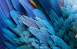 canvas print picture - Close up of beautiful bird feathers of Blue and Yellow Macaw, exotic natural textured background in different blue colors and yellow, Lagoa das Araras, Mato Grosso, Brazil