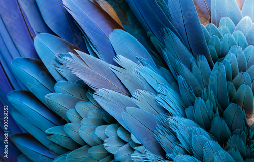 Close up of beautiful bird feathers of Blue and Yellow Macaw, exotic natural tex Fototapet