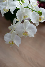 Only Phalaenopsis, Orchid, Bou...