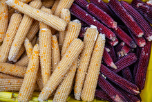 Orange Color Corn For Sale At ...