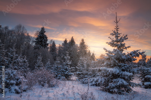 winter forest in the evening